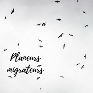 Jour 20 du calendrier de l'avent d'une histoire de plumes: pourquoi les oiseaux planeurs évitent-ils de survoler les grandes étendues d'eau?
