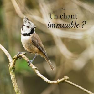 Jour 21 du calendrier de l'avent d'une histoire de plumes: Le chant des oiseaux est-il immuable?