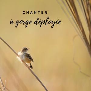 Jour 23 du calendrier de l'avent d'une histoire de plumes: Tous les oiseaux chantent-ils le bec ouvert?