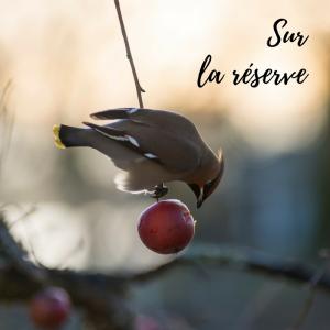 Dernier jour pour le calendrier de l'Avent d'Une histoire de plumes sur les oiseaux! La question du jour: les oiseaux font-ils des provisions ?