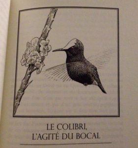 Une illustration du livre Histoires remarquables, sujet de notre série Une histoire de livres, du blog d'Une histoire de plumes