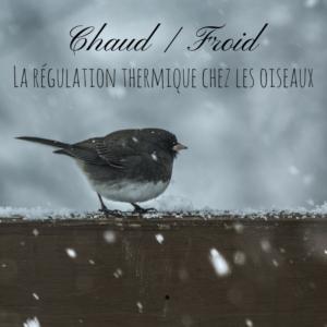 Le Bird-Blog d'une histoire de plumes vous explique la régulation thermique chez les oiseaux