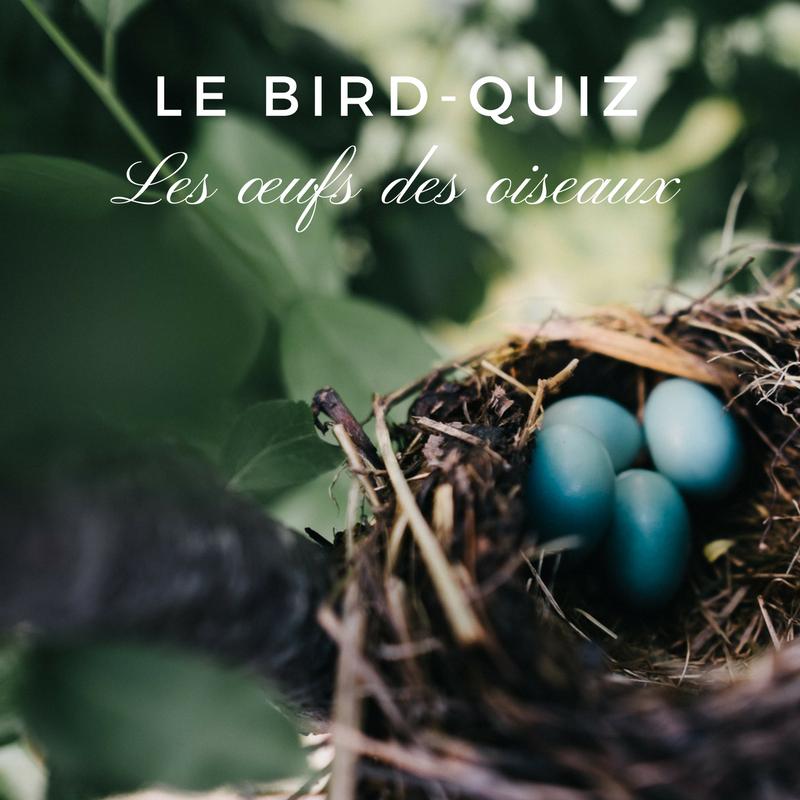 Un nouveau quiz sur les œufs des oiseaux par le Bird-Blog d'une histoire de plumes!