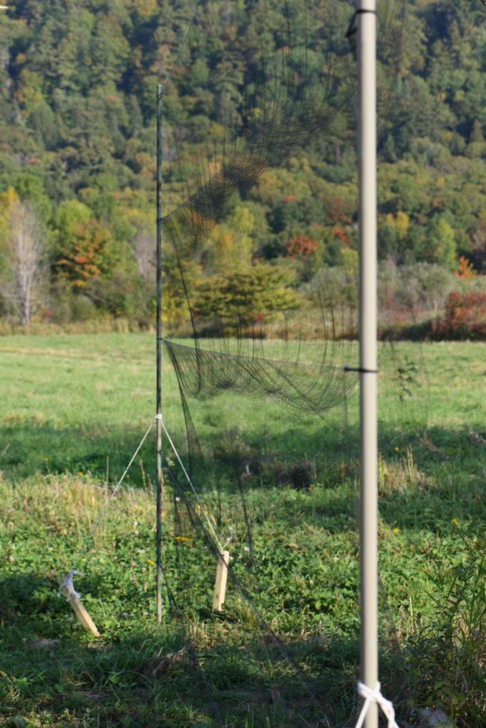 Un filet japonais, moyen de capture pour le baguage des oiseaux, nouvel article du bird-blog d'une histoire de plumes sur le baguage des oiseaux