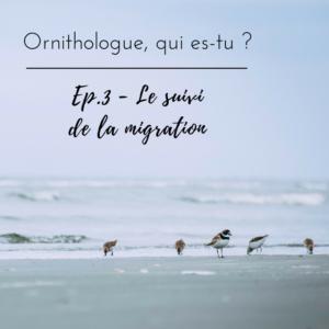 Pourquoi suivre les oiseaux pendant la migration? Réponse dans l'article du bird-blog d'une histoire de plumes