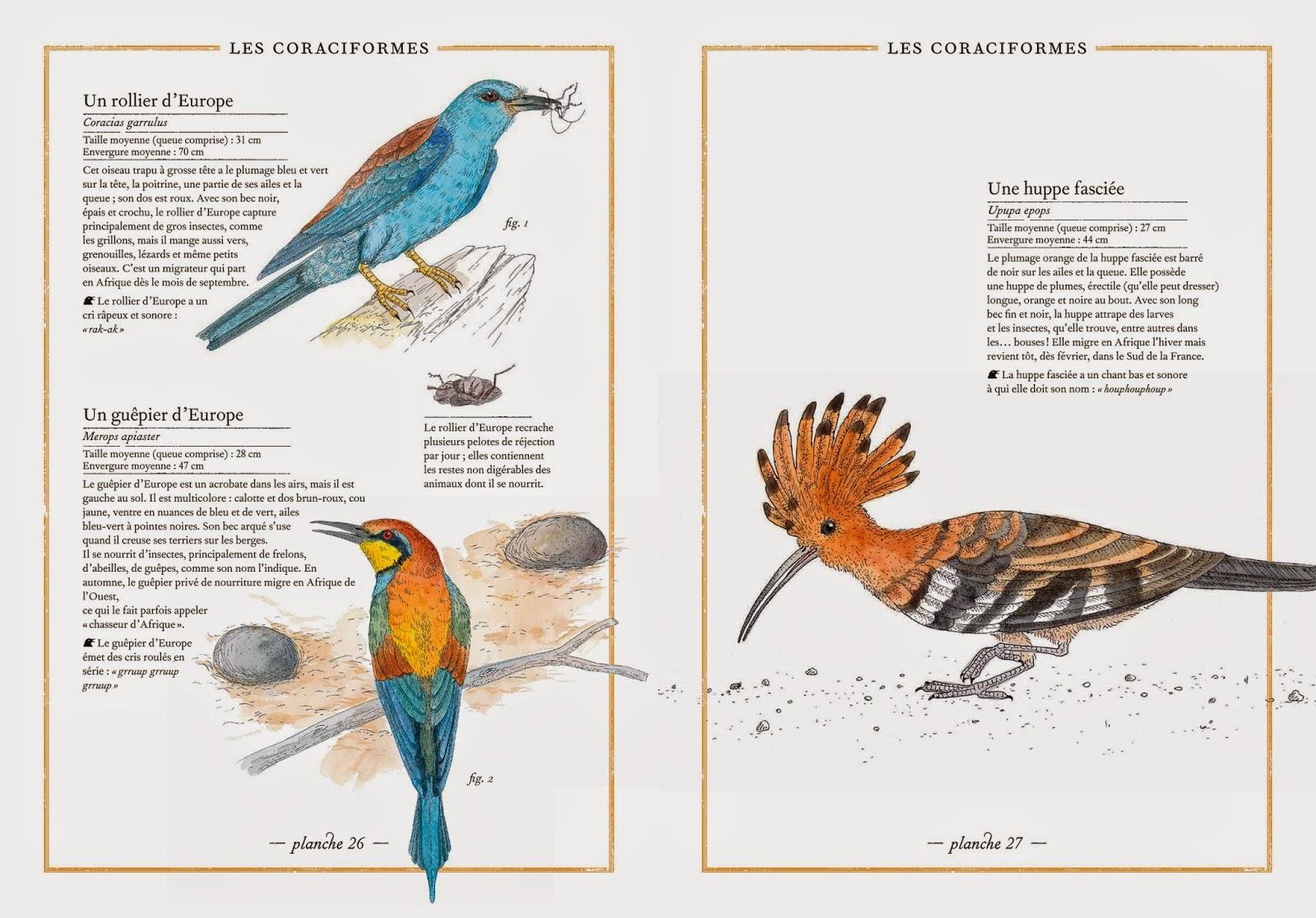 l'inventaire illustré des oiseaux, un livre présenté dans le nouvel article du bird-blog d'une histoire de plumes