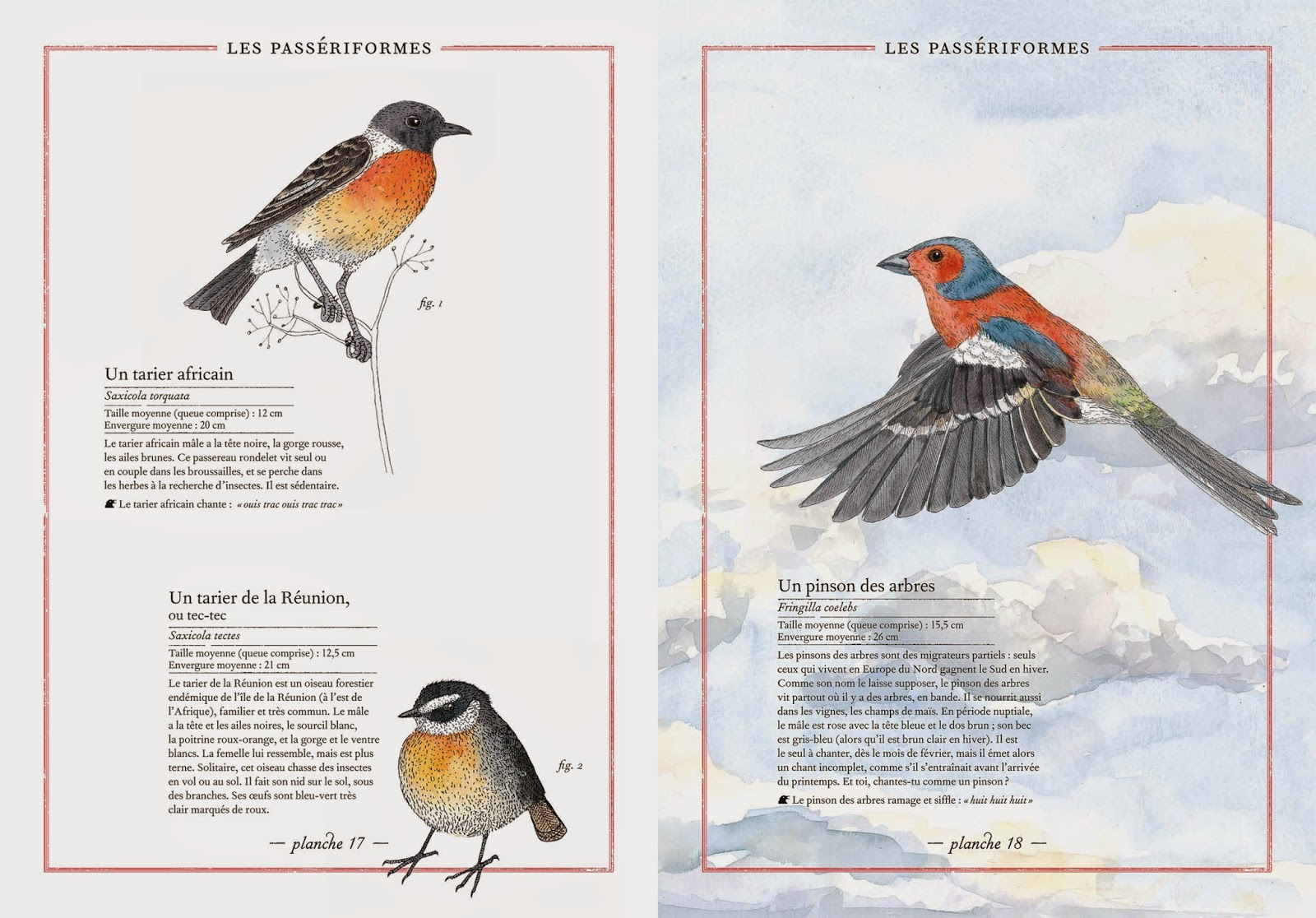 l'inventaire illustré des oiseaux, un des livres présentés dans le nouvel article du bird-blog d'une histoire de plumes