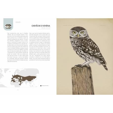 """Exemple n°2 d'illustration du livre Rapaces diurnes et nocturnes d'europe de chez artémis, un article """"une histoire de livres"""" d'une histoire de plumes"""