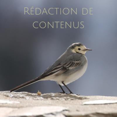 Rédaction de contenus web - un service proposé par une histoire de plumes - community management en gironde