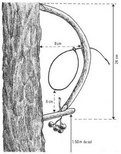 la tenderie aux grives, une des chasses traditionnelles évoquées dans le nouvel article du Bird-Blog d'une histoire de plumes