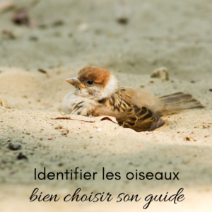 Identifier les oiseaux, bien choisir son guide, le nouvel article du Bird-Blog d'Une histoire de plumes