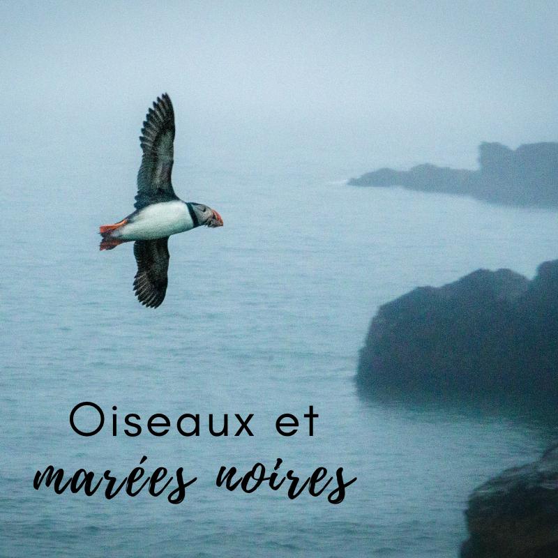 Le nouvel article du Bird-Blog d'Une histoire de plumes s'intéresse aux marées noires et à ses conséquences sur l'avifaune