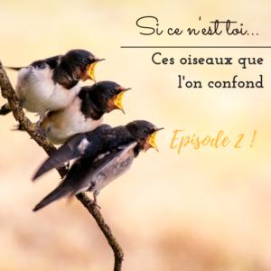 Apprendre à faire la différence entre des oiseaux que l'on confond souvent, le nouvel
