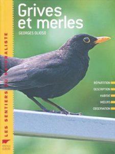 Les grives et merles, une monographie d'oiseau, un nouvel article du Bird-Blog d'Une histoire de plumes