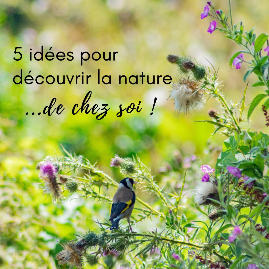 5 idées pour découvrir la nature - le nouvel article du bird blog d'une histoire de plumes