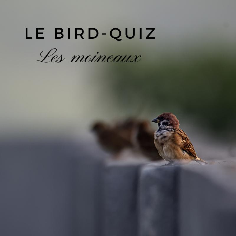 Apprenez-en plus sur les moineaux avec ce quiz d'Une histoire de plumes dans le Bird-Blog
