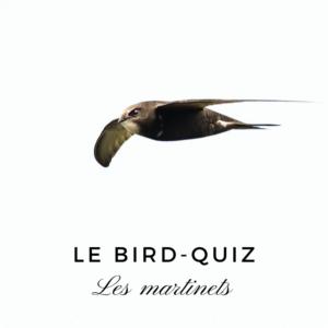 Testez vos connaissances sur les martinets avec le nouveau bird quiz d'une histoire de plumes