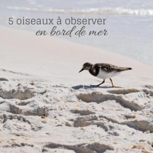 5 oiseaux à observer en bord de mer, le nouvel article du Bird-Blog d'Une histoire de plumes