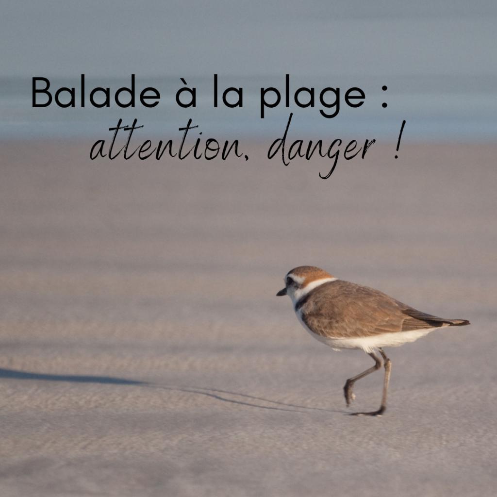 Balade à la plage: attention danger le nouvel article du Bird-Blog d'Une histoire de plumes